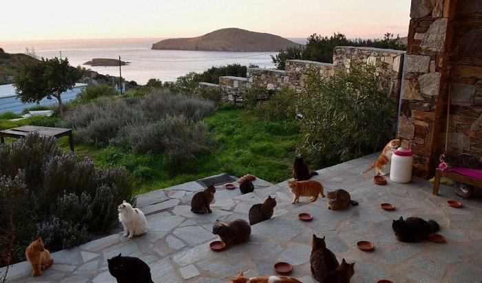 ВГреции открыта вакансия заклинателя котов