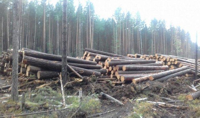 ВКазачинско-Ленском районе задержали группу черных лесорубов