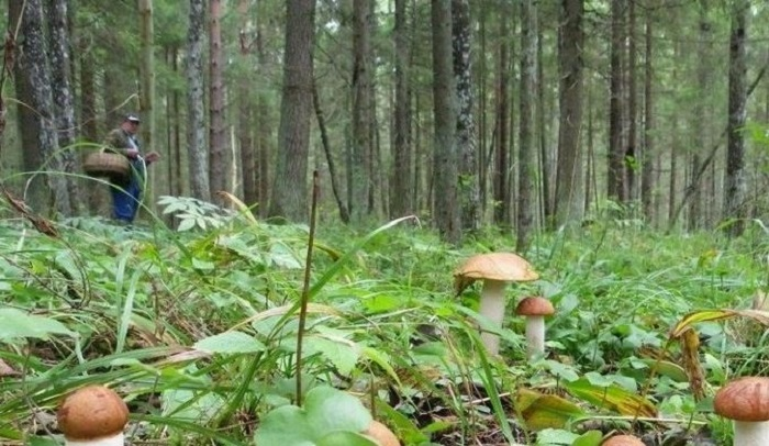 ВУсть-Кутском районе спустя трое суток нашли сборщицу грибов