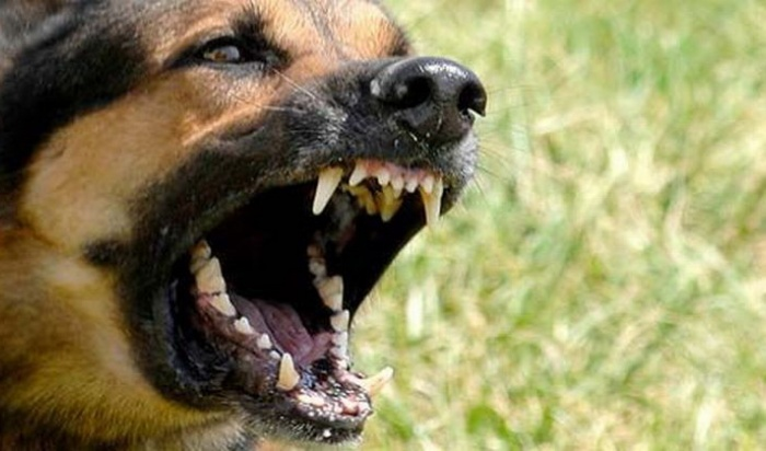 Агрессивная кавказская овчарка набрасывалась нажителей Мальты Усольского района