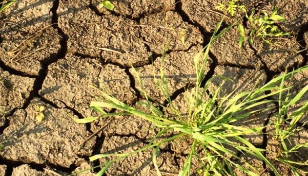Режим чрезвычайной ситуации ввели вБоханском иУсольском районах из-за засухи