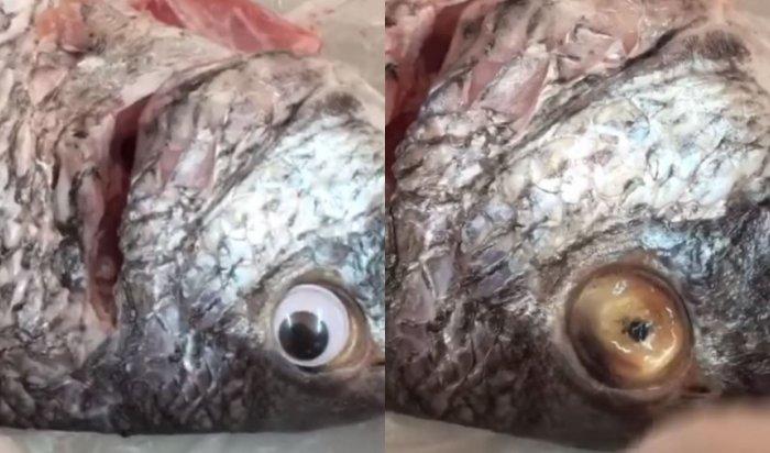 Кувейтский магазин выдавал лежалую рыбу засвежую, приклеивая ейпластиковые глаза (Видео)
