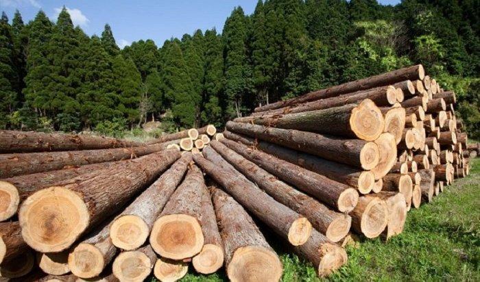 Генпрокуратура заинтересовалась деятельностью чиновников, позволяющих незаконные рубки леса вПриангарье