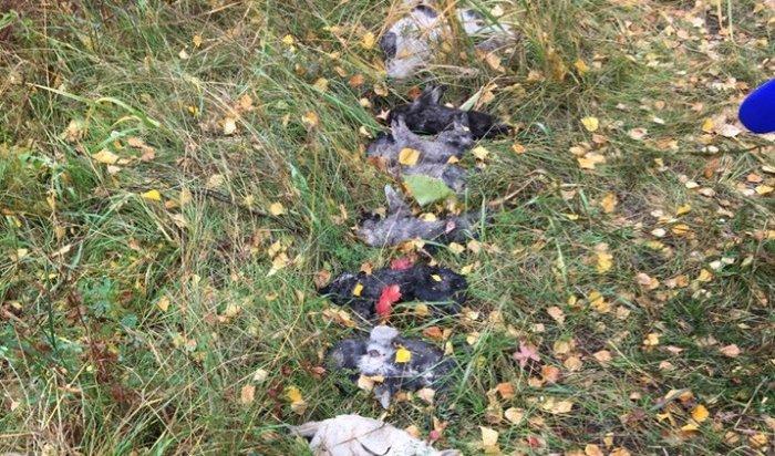 Жители Ленинского района обнаружили 14убитых щенков, выложенных вряд