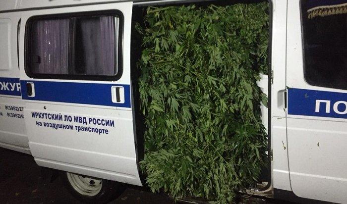 27кустов марихуаны изъяли полицейские вИркутском районе