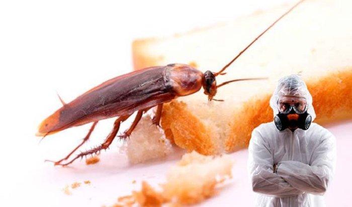 24человека были эвакуированы из-за травли тараканов впабе наулице Чкалова