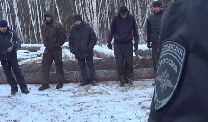 ВИркутской области перед судом предстанет организованная группа черных лесорубов (Видео)