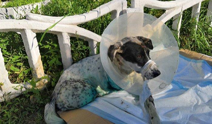 Собаке изАнгарска напечатают лапы на3D-принтере