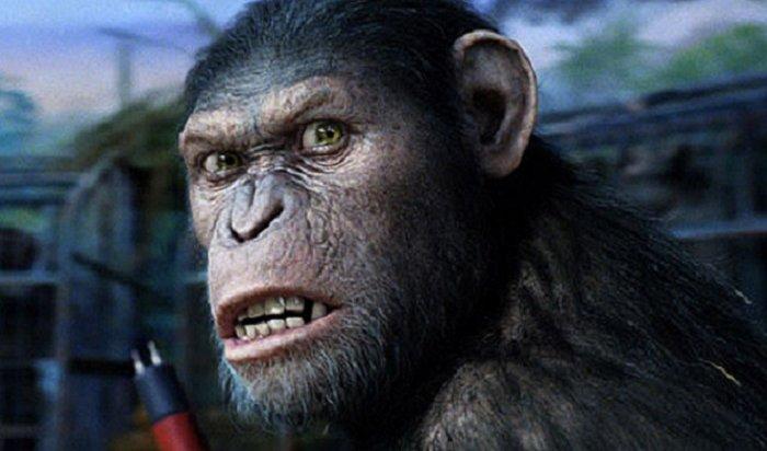 ВИндии обезьяны насмерть закидали кирпичами местного жителя