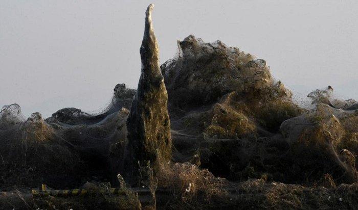 Пауки вГреции заткали паутиной квадратный километр земли (Видео)
