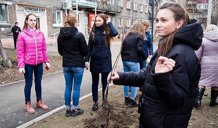 Депутат Думы Иркутска Виталий Матвийчук организовал высадку деревьев вНово-Ленино
