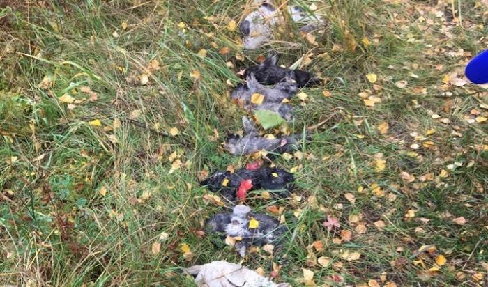 Экспертиза показала, почему погибли щенки изБерезового