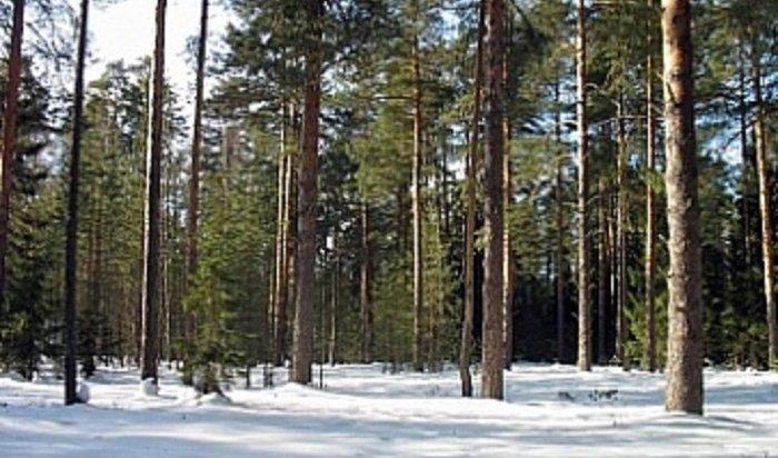 ВИркутске высадили около 5тысяч новых деревьев икустарников
