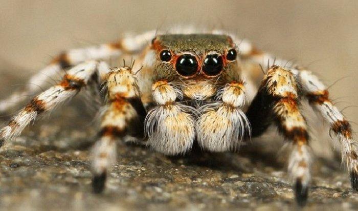 В Москве хирурги спасли мужчине руку после укуса паука из пакета с инжиром