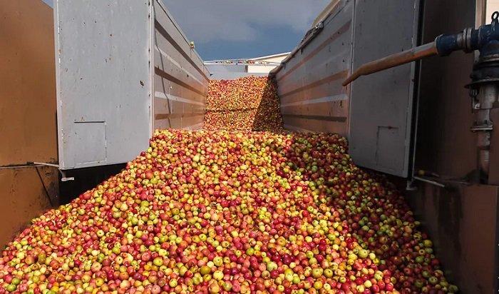 838 килограммов яблок задержали подороге вИркутск