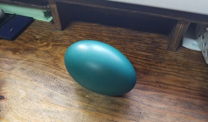Страус эму снесла яйцо вИркутском зоосаде