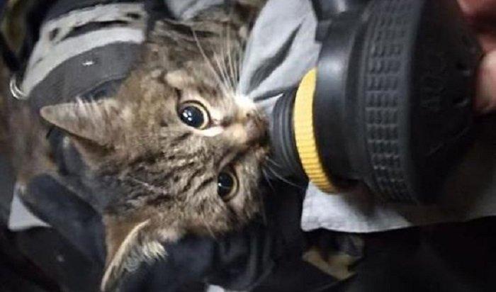 Сотрудники МЧС спасли кота напожаре всадоводстве Бирюсинка