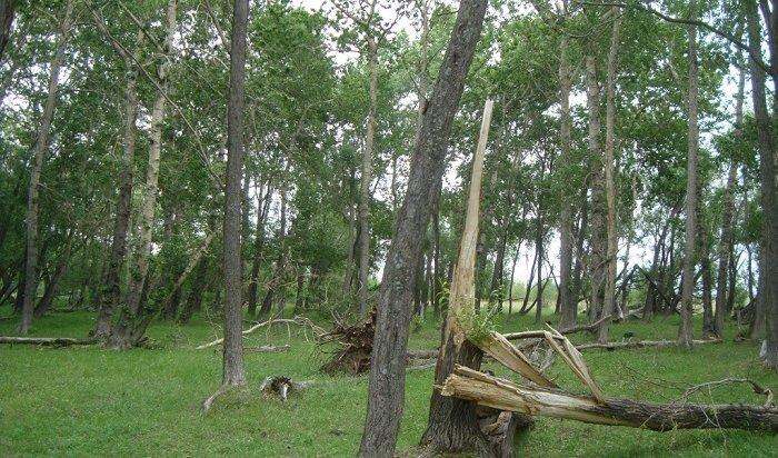 Жителям Иркутской области разрешили свободно собирать валежник влесу