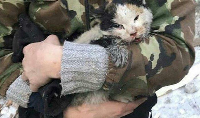 Кошка изфуры разбившегося дальнобойщика нашла дом вИркутске