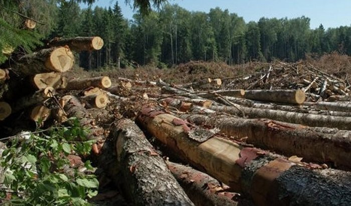 Замминистра лесного комплекса Иркутской области пробудет под стражей до10апреля
