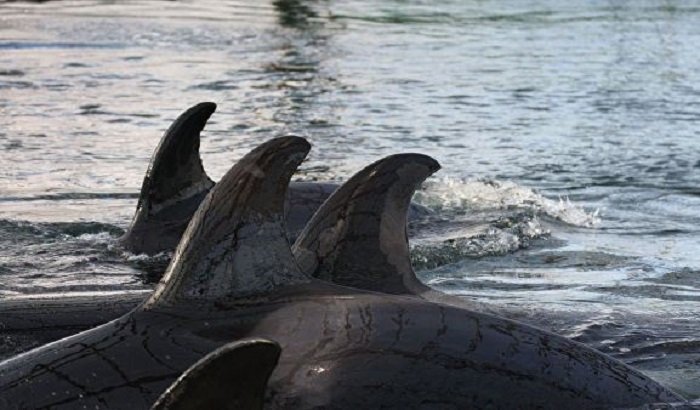 ФСБ завела новые дела из-за «китовой тюрьмы» вПриморье