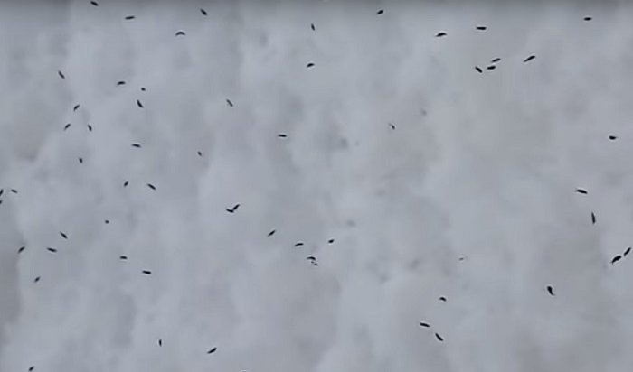 Под Сызранью выпал снег сживыми насекомыми (Видео)
