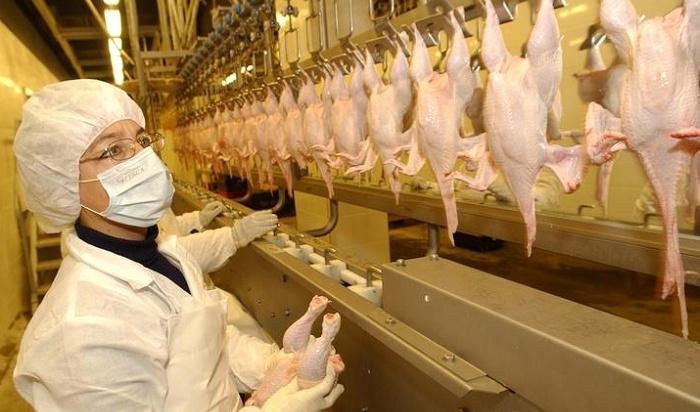 Работу нескольких цехов Ангарской птицефабрики приостановили на90суток