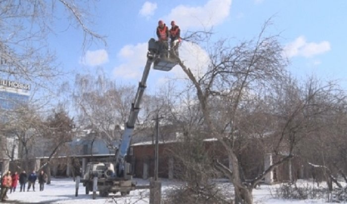 ВИркутске проводят формовочную обрезку деревьев