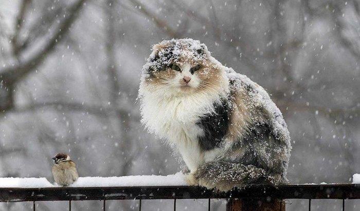 МЧС поИркутской области предупреждает онеблагоприятных погодных явлениях