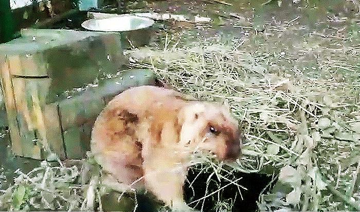 Байбаки проснулись вИркутском зоосаде снаступлением весны (Видео)