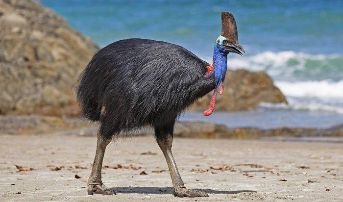 ВСША самая опасная птица вмире убила своего хозяина когтями