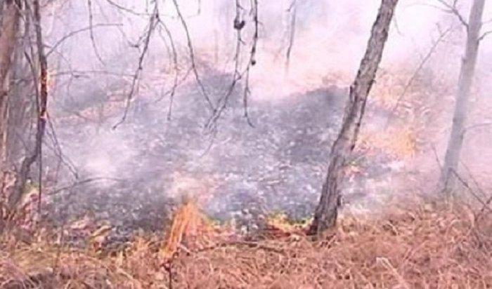 ВИркутской области ликвидировали 10лесных пожаров 15апреля