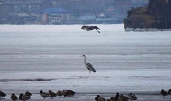НаТаловские болота вКултуке вернулись птицы