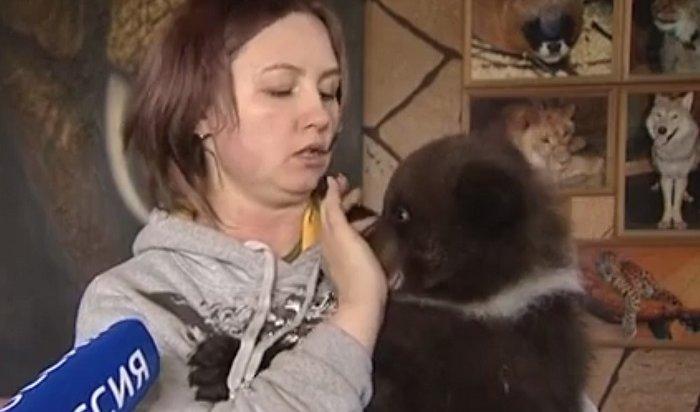 Виркутской зоогалерее поселился медвежонок (Видео)