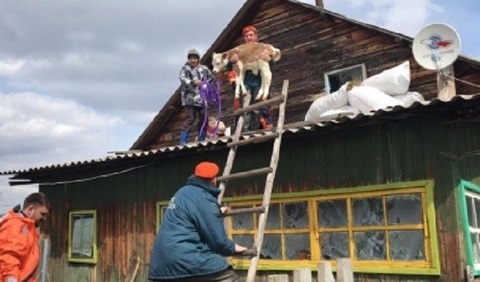 ВКатангском районе продолжается вскрытие реки Нижняя Тунгуска