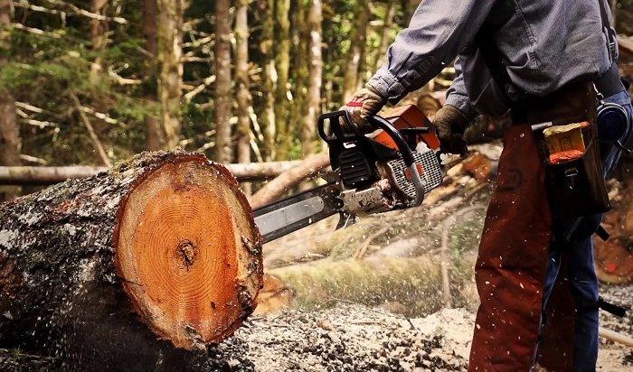 Организатора незаконных рубок леса отправили зарешетку вЧунском районе