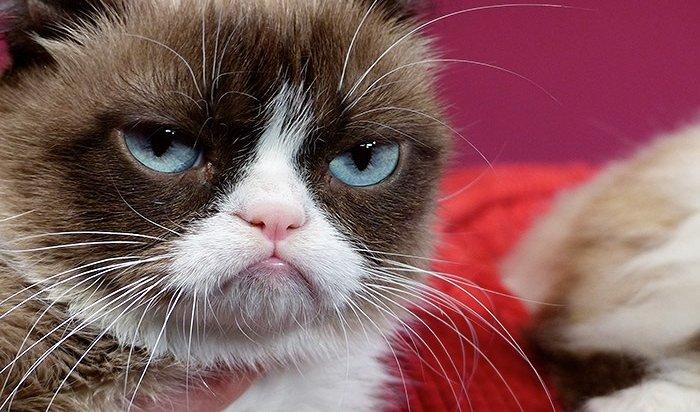 ВСША умерла кошка-мем Grumpy Cat