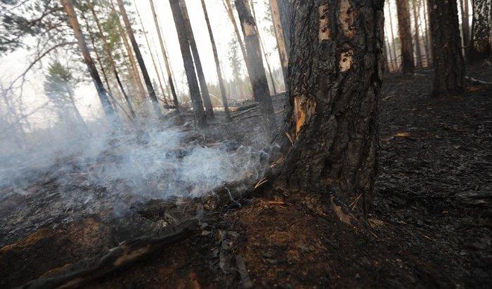 Несколько лесных пожаров действуют вИркутской области