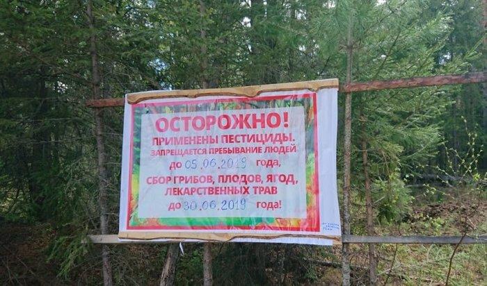 ВИркутской области началась обработка отсибирского шелкопряда