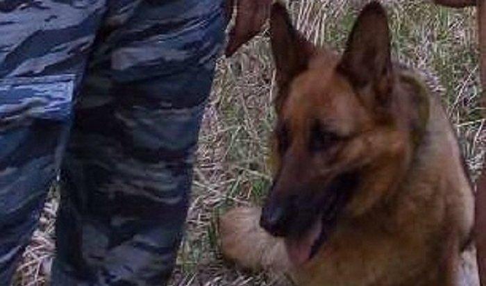 Cлужебно-разыскная собака Ханна нашла заблудившегося влесу иркутянина