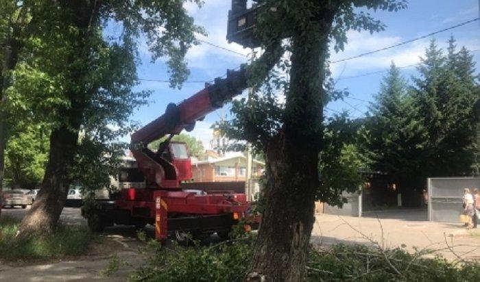 ВИркутске летом появится 8500новых деревьев икустарников