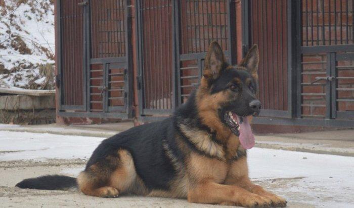 Иркутян приглашают оценить способности служебных псов 21июня