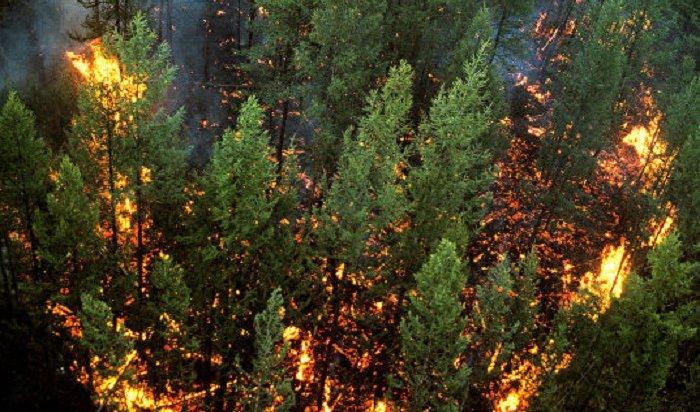 ВИркутской области горит более полутора тысяч гектаров тайги