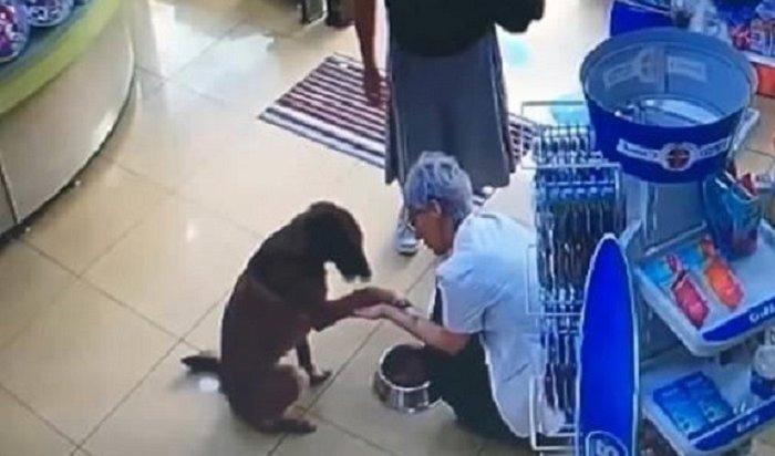 Раненый пес сам пришел ваптеку ипопросил опомощи (Видео)