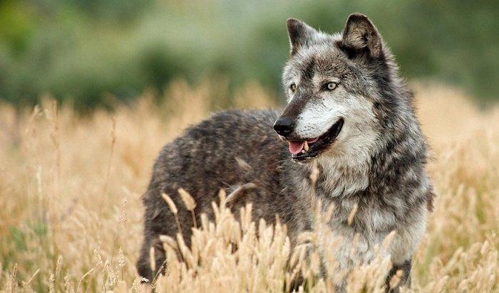 Сезон охоты стартует вИркутской области с17августа