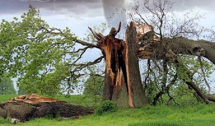 ВИркутске отсильного ветра попадали деревья