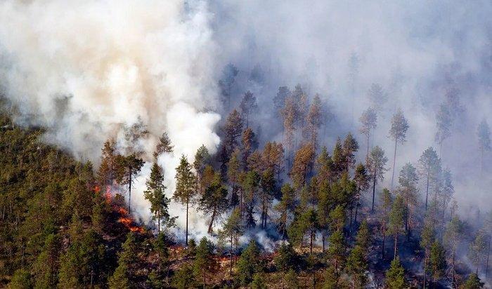 Площадь лесных пожаров вИркутской области составила более 617тысяч гектаров
