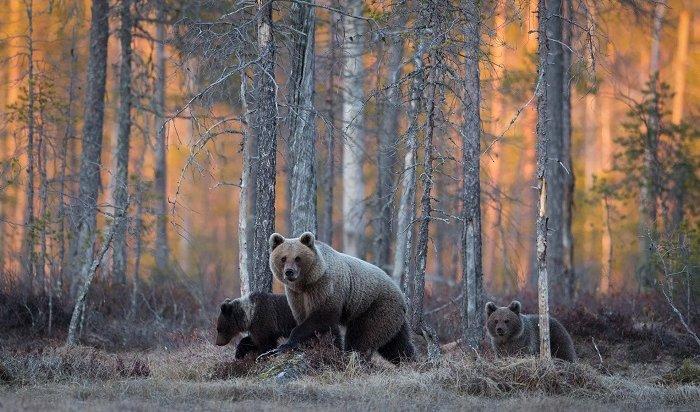 Дикие животные спасаются изгорящей тайги в Иркутской области (Видео)
