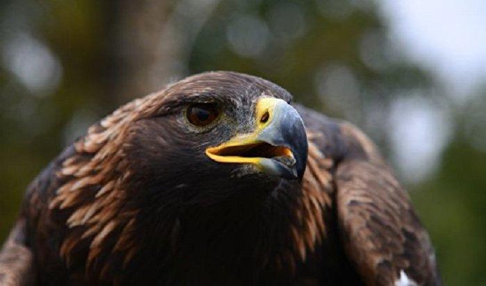 ВСибири погибло 80% потомства хищных птиц