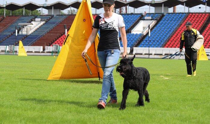 ВИркутске стартовал областной чемпионат поспортивно-прикладному собаководству (Фото+Видео)